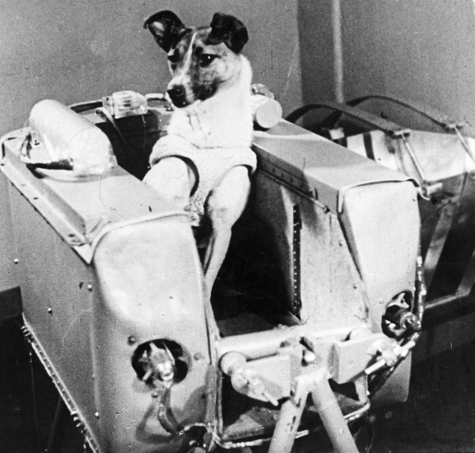 Laika, la primera perra astronauta